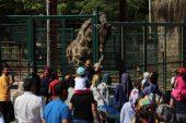 Ziyaretçilerin zürafa ile fotoğraf keyfi
