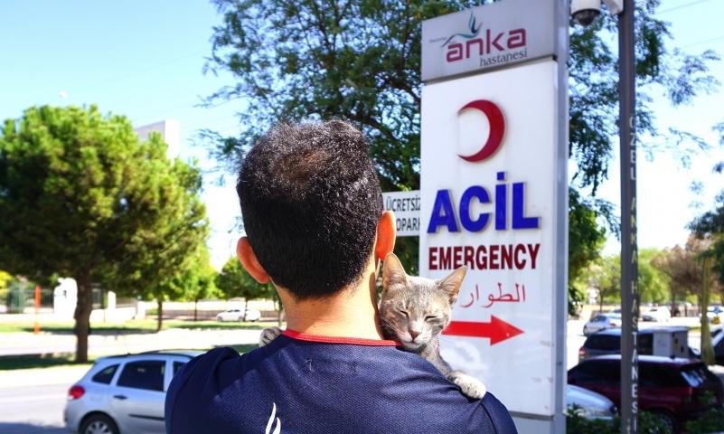 Anka'dan sokak hayvanlarına destek