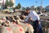 ŞAHİNBEY'DE KURBAN SATIŞ VE KESİM YERLERİ BELİRLENDİ